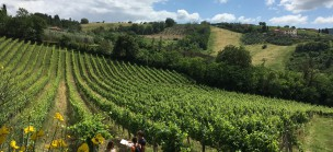 Hike and Wine tours