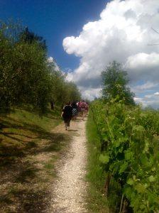 Hiking in vineyards